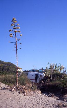spiaggia-con-fiore-agave