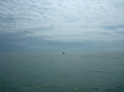 A pochi metri da noi, una pinna di delfino sorge dal mare al largo di Scanno Boa.