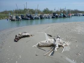 Spiaggia e porticciolo all'ingresso della sacca di Scardovari (vicino a Barricata)