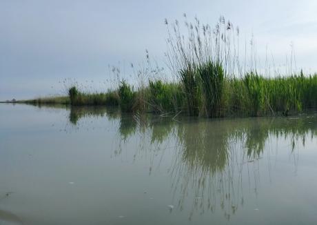 canale dal Po di Tolle alla laguna degli Allagamenti Sud